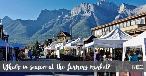 farmers market july in season
