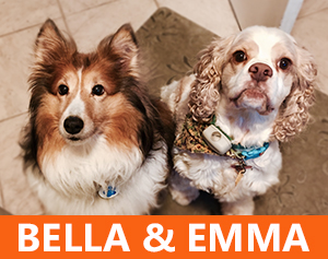 Pet Therapy Dogs - Bella and Emma