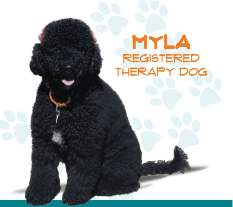 Myla, Registered Therapy Dog