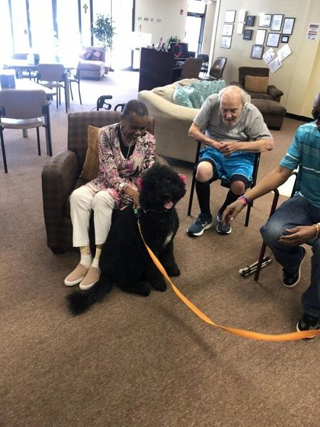 myla the therapy dog