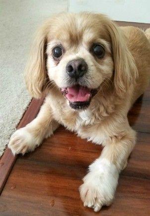 Houston Therapy Dog